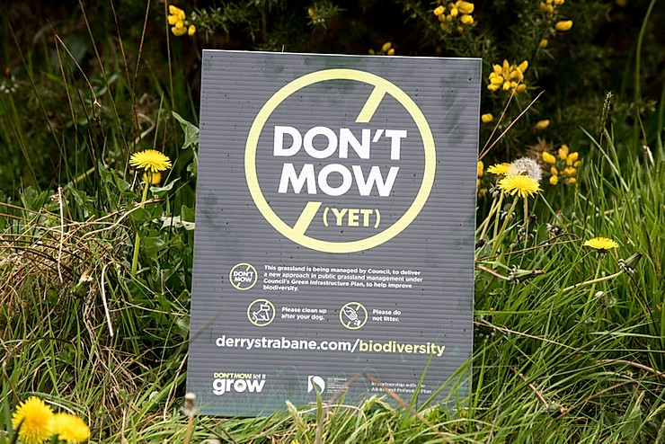 A No-Mow Area: Derry/Strabane District Council sign explaining that the grassland is being managed for biodiversity under the Green Infrastructure Plan