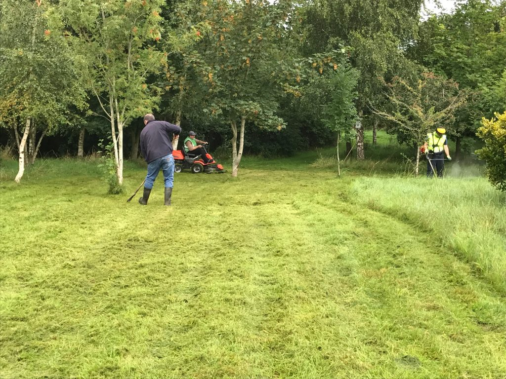 Working with a local Tidy Towns group to create an area of wildlife meadow in their wildlife garden