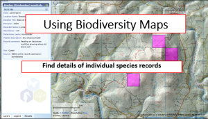 Find details of individual species records