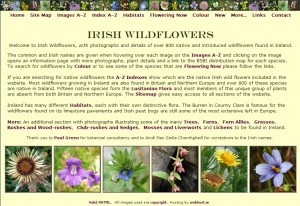 Irish-Wildflowers-300x206