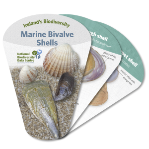 Marine Bivalve Shells identification swatch