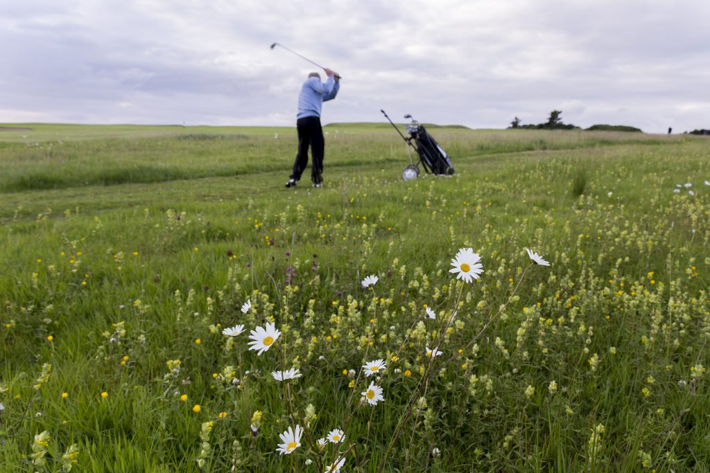 Areas of rough in Ballycastle Golf Club are being managed as meadows