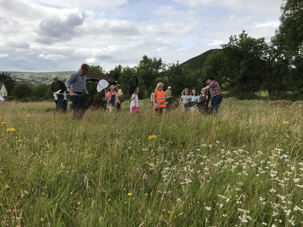 A bumblebee identification event, one of the many community events being delivered in the meadows on the Glens Great Grassland Trail