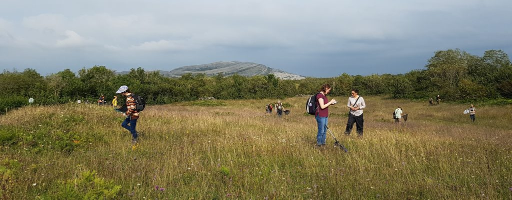 A small group of recorders are pictured here in search of the rare and threatened Shrill Carder Bumblebee as part of our Annual Recorder's event in 2019 in the Burren, Co. Clare.