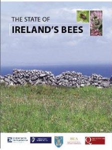 State-of-Irelands-bees