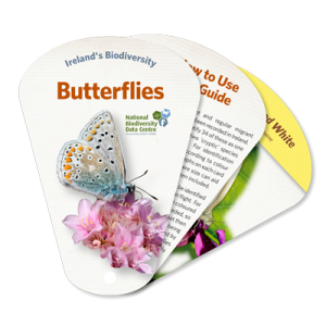 Butterfly identification guide swatch book
