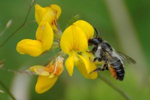 Protecting Farmland Pollinators -About the Project